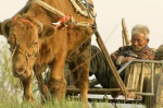 牛の鈴音2
